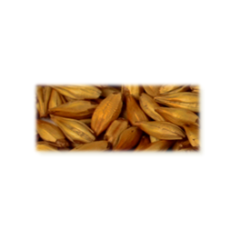 Cara gold Malt, Castle Malting Group, ebc 120, pris pr. 100 g.