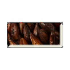 Roasted Barley, Thomas Fawcett, ebc 1300-1300, pris pr. 100 g.