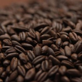 Chocolate RYE (rug) malt ebc 500-800 pris pr. 100 g.
