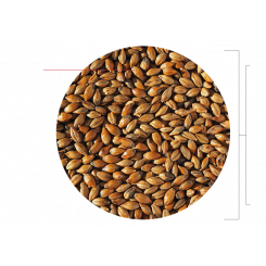 Brown Malt, Crisp Malting Group, ebc 120 - 150, Pris pr. 100 g.